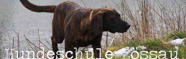 Hundeschule Lössau